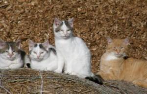 katzen auf stroh